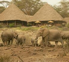 3 Days Flight Safari To Amboseli Tortilis Camp Tour