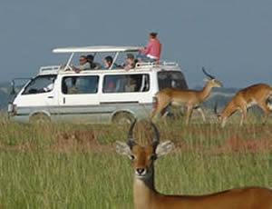 8 Days Kenya Wildebeest Migration Safari Tour