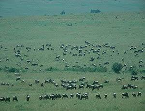 3 Days Amboseli Safari Tour