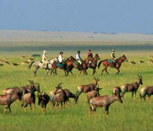 Horse Riding In Masai Mara