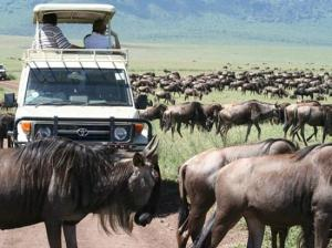 5 Days Sweetwaters Conservancy, Lake Nakuru, Masai Mara Tour Packages