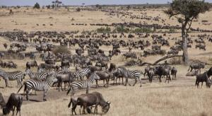 8 Days Aberdares, Samburu, Olpajeta, Lake Nakuru, Masai Mara Safari Tour Packages