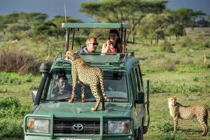 Cheaters in Masai Mara