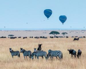 Hot Air Balloon and wildlife